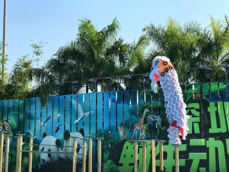 深圳春节动物园舞狮表演